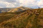 COMME LE BERGER VA BIEN A LA MONTAGNE !  Dans les Carpates roumaines, les bergers, sont nombreux, et les ours, lynx, loups aussi...