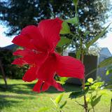 Gardening 2015 - 100_0515.JPG