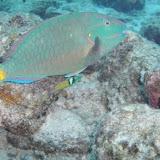 Bonaire 2011 - PICT0242.JPG
