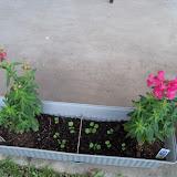 Gardening 2011 - 100_7043.JPG