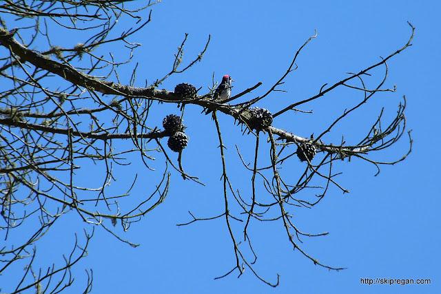Bird-Festival-345.jpg
