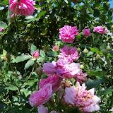 Gardening 2012 - 115_1743.JPG