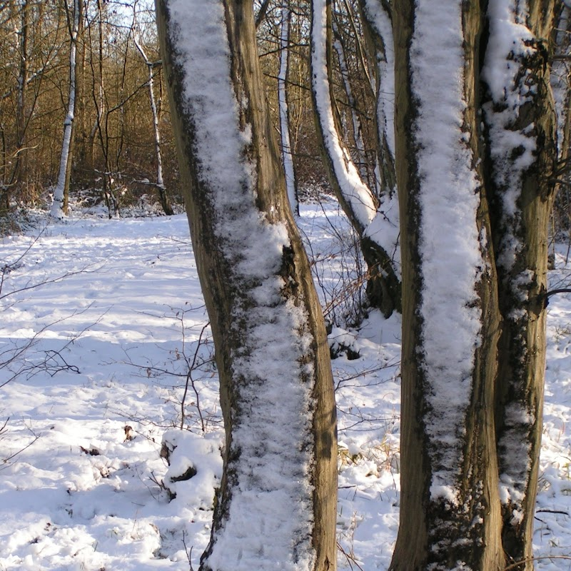 Tattenhoe_17 Snowy Trees.jpg