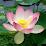 Trinath Mishra's profile photo