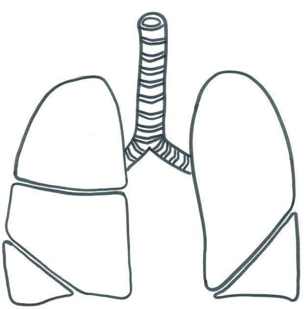 Pinto Dibujos: Dibujo de pulmones