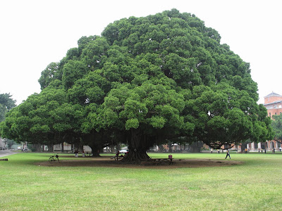 大樹理論 http://amoney-go.blogspot.com/2014/09/trees-theory.html