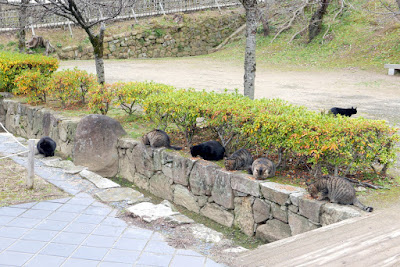 Some of the cats on the Himeji Castle park area