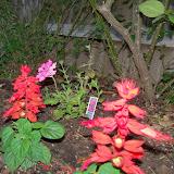 Gardening 2014 - 116_1136.JPG
