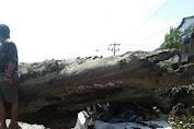 Pohon Kemiri Tumbang Menutupi Akses Jalan Protokol Medan - Kotacane