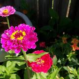 Gardening 2011 - 100_9105.JPG