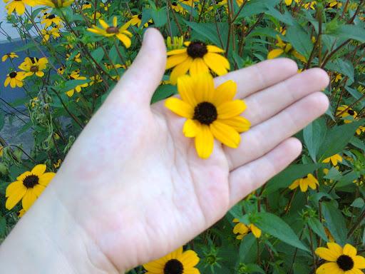 Fotos roemenie zomer van mobiel 2015 juli augustus 030.jpg