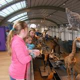 2012-2013 musée des sciences naturelles (3A et 4A)