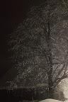 ARBRE DE NOEL ? Le Grand Flodden, une chèvrerie en Estrie