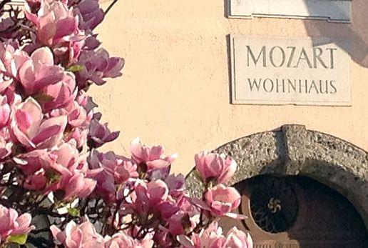 Mozart-Wohnhaus in Salzburg mit Magnolien