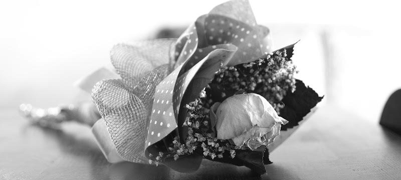 La rosa di oraziopuccio