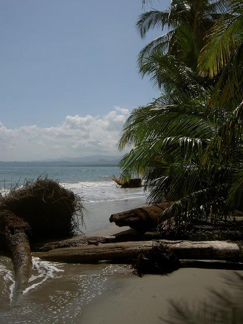 2007-02-01 Hike Cahuita - PICT3194.JPG