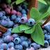 На Міжгірщині від учора шукають чоловіка, що пішов по ягоди і зник
