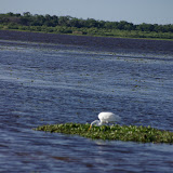 04-06-12 Myaka River State Park - IMGP4461.JPG