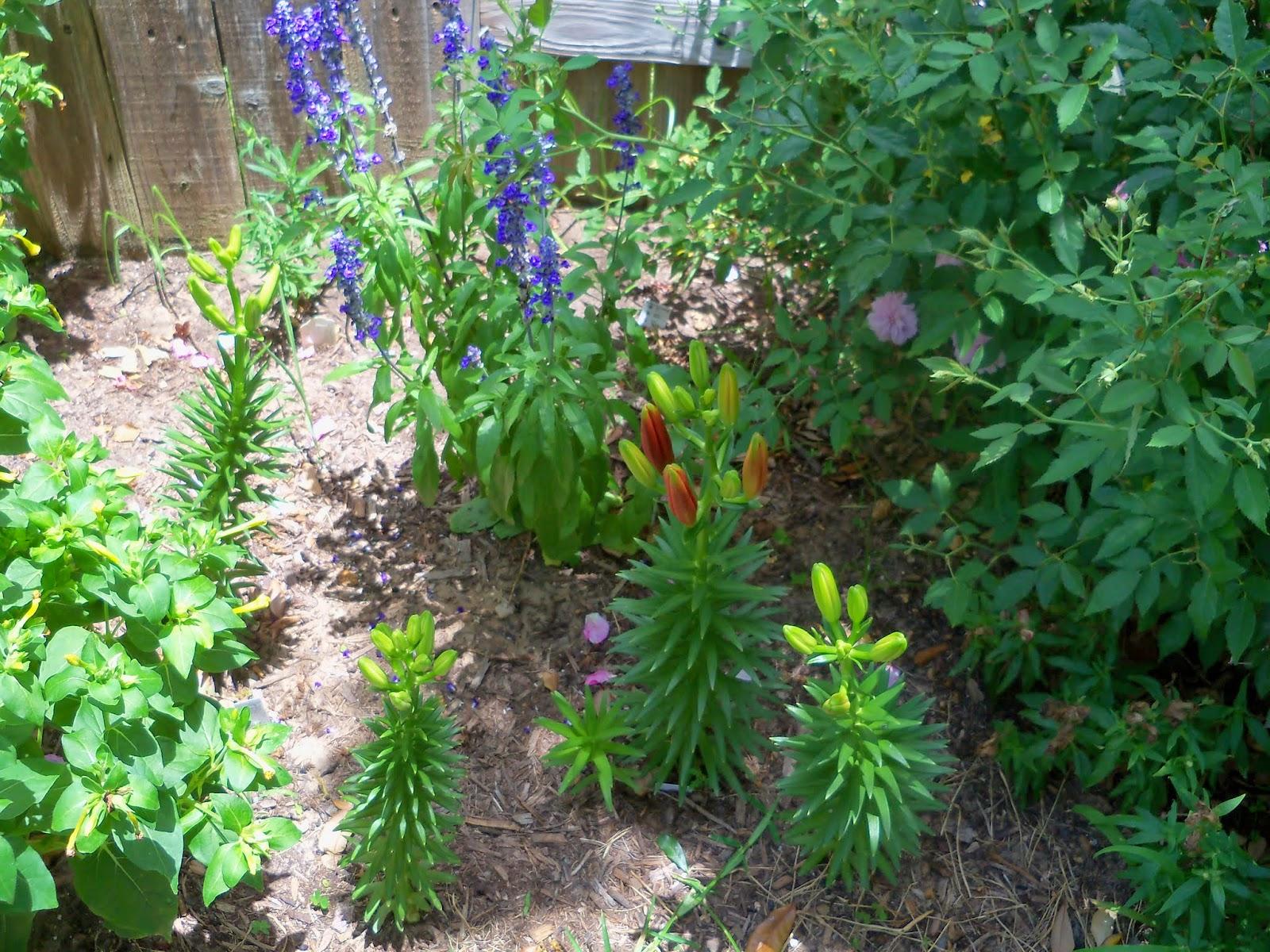 Gardening 2014 - 116_2978.JPG