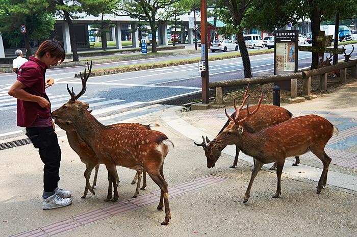 Nara01.jpg
