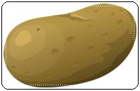 คำศัพท์ภาษาอังกฤษ_potato_Vegetable