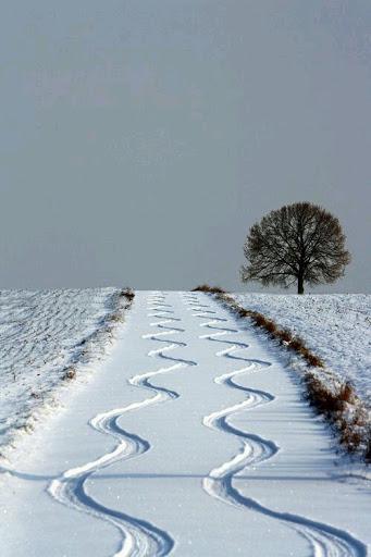 Paisagem branca neve