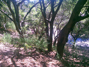 Photo: If you think it looks bad here under the native trees, wait till you see under the eucalypti.