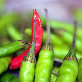 Green Chili by Kunal Kumar Maurya - Food & Drink Fruits & Vegetables ( chillies, chilli, green chili )