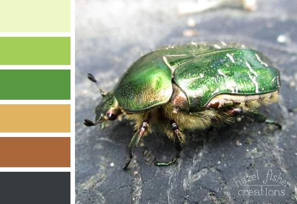 2015 July 01 Colour palette inspiration beetle photograph hazelfishercreations