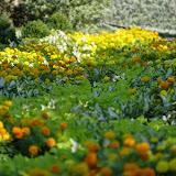 10-26-14 Dallas Arboretum - _IGP4266.JPG
