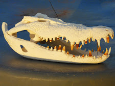 trophy-preparation-crocodile-skull.jpg