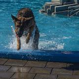 zwemmen Caribabad Gorichem
