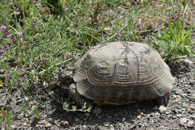 Schildkröte am Straßenrad