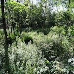 Sous-bois sur les bords de l'Essonne