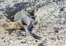 Ecuador-Galapagos-Ferandina-180219-0080-ToWeb