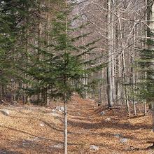 Orientacijski vikend, Črni dol 2007 - P0176100.JPG
