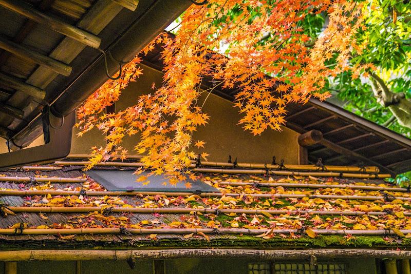 京都 圓徳院 紅葉 写真4