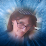 Stephanie Brossett's profile photo