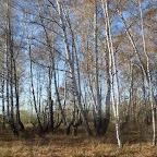Озеро Круглое Подгоренский район 005.jpg