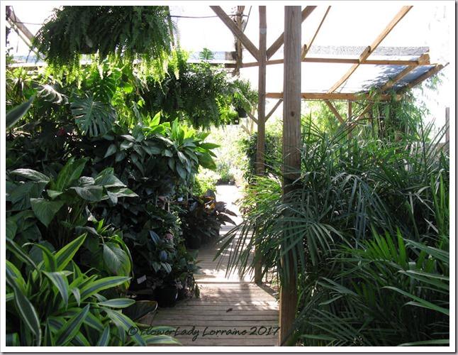 05-08-foliage-plants2