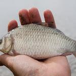 20160706_Fishing_Grushvytsia_021.jpg