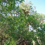 04-06-12 Myaka River State Park - IMGP9887.JPG