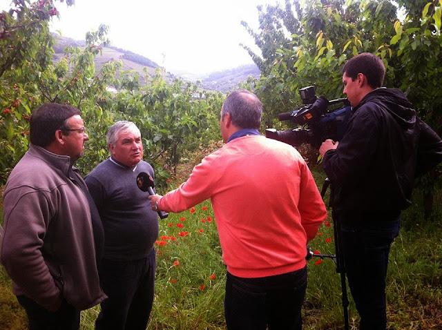 Reportagem TVI - Cereja - Tempo não ajudou, mas há sabor garantido