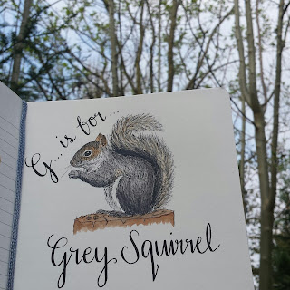 Grey Squirrel :: www.AliceDrawsTheLine.co.uk