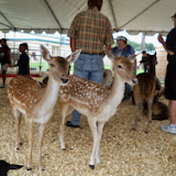 Fort Bend County Fair 2014 - 116_4298.JPG
