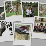 Bałtów - pażdziernik 2008