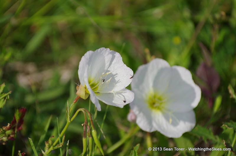 2013 Spring Flora & Fauna - IMGP6316.JPG