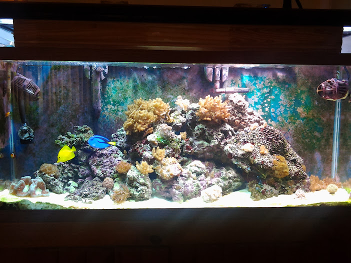 My 55 Gal Reef Tank Look At The Pics
