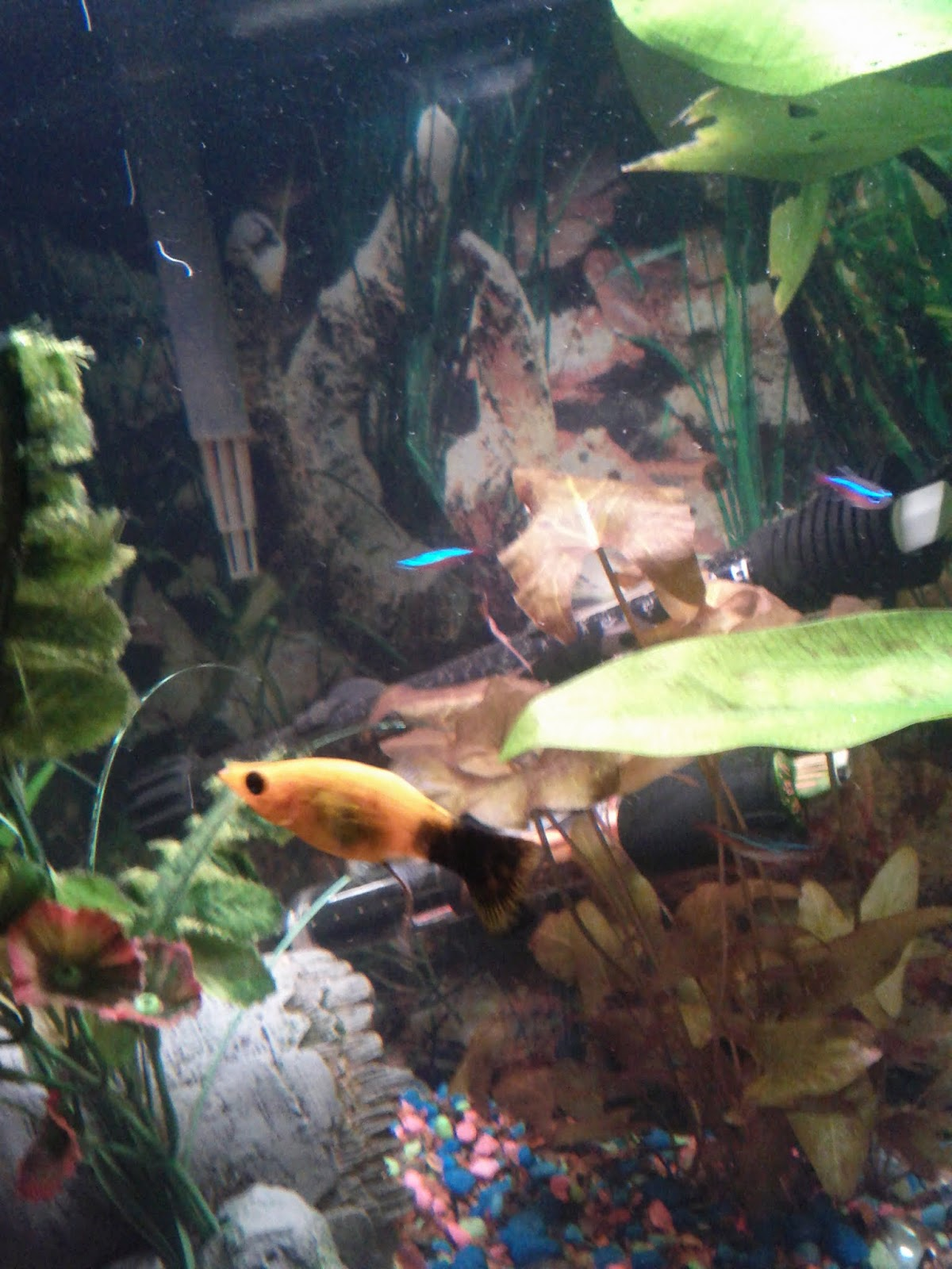 Fish - IMG_20120930_212013.jpg