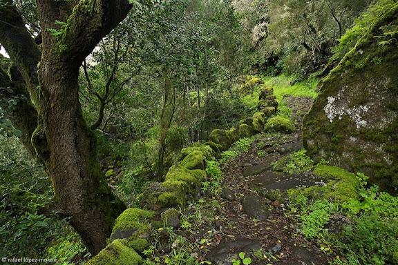 Camino de Jinama, camino histórico, siglo XVII, el Golfo,Frontera, Isla del Hierro, Canarias